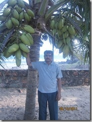 Author_at_Thanthadi_beach_coconut_tree